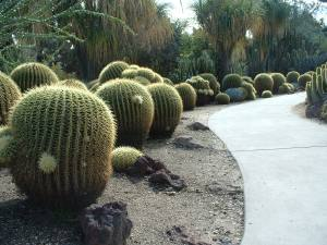 My favorite, the Desert Garden